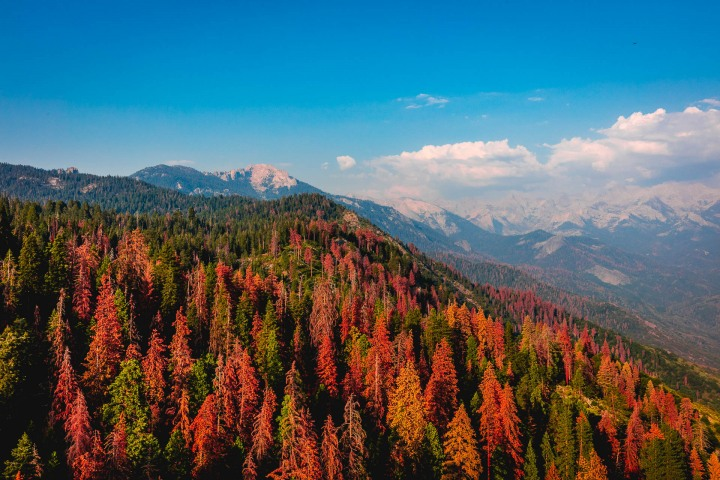 California, Fall Colors, North America, Sequoia National Park, Travel, United States, Yosemite National Park
