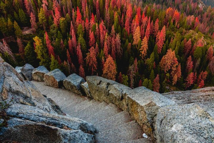 California, North America, Sequoia National Park, Travel, United States, Yosemite National Park