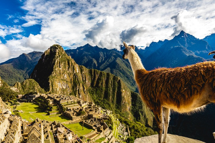 AGP Favorite, Andes Mountains, Cusco, Llama, Machu Picchu, Peru, South America, Travel