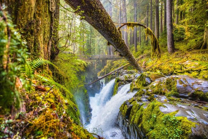 AGP Favorite, Hoh Rainforest, North America, Olympic National Park, Seattle, Travel, United States, Washington, Waterfall