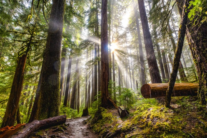 AGP Favorite, Hoh Rainforest, North America, Olympic National Park, Seattle, Travel, Washington