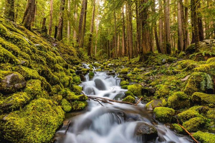 AGP Favorite, Hoh Rainforest, Long Exposure, North America, Olympic National Park, Seattle, Travel, Washington