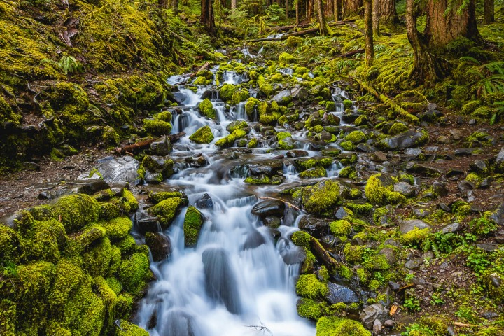 Hoh Rainforest, Long Exposure, North America, Olympic National Park, Seattle, Travel, United States, Washington