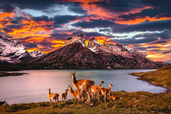 AGP Favorite, Chile, Guanacos, Patagonia, South America, Sunset, Torres del Paine, Travel