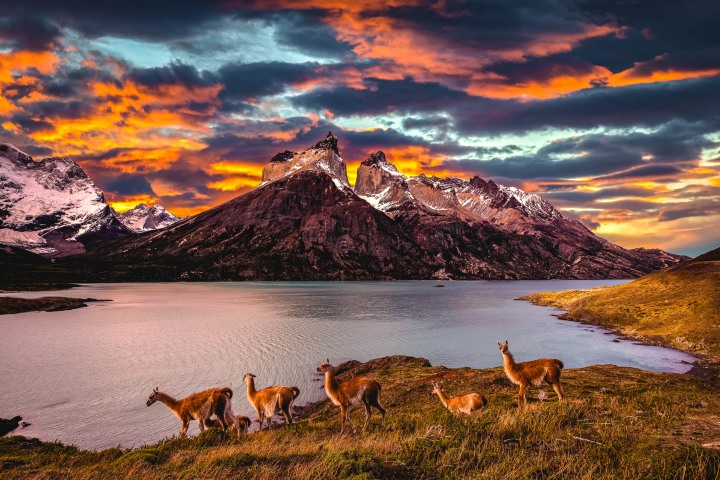 Chile, Guanacos, Mountains, Patagonia, Snow Covered, South America, Sunset, Torres del Paine, Travel