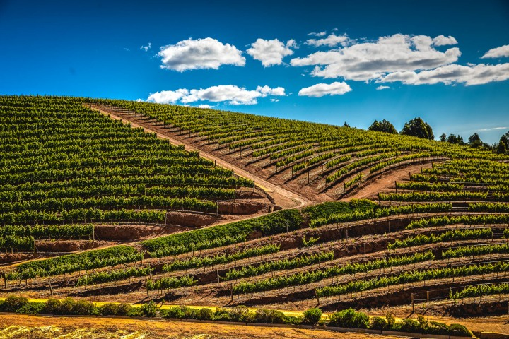 Africa, Cape Town, South Africa, Travel, Vineyard