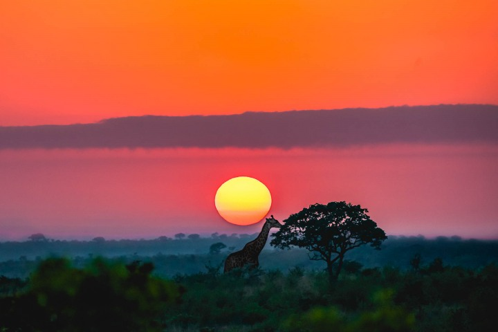 Africa, AGP Favorite, Giraffe, Kruger National Park, Safari, South Africa, Sunrise, Travel