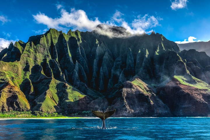 AGP Favorite, Hawaii, Humpback whale, Kauaii, Nā Pali Coast, North America, Sea Cliff, Travel, United States, volcanic mountains, Whale Watching
