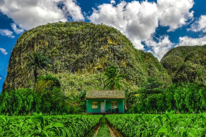 AGP Favorite, Caribbean, Cuba, Plantations, Tobacco, Travel, Vinales