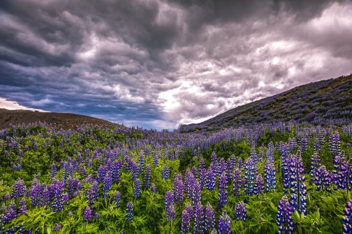 AGP Favorite, Europe, Hvannadalshnúkur, Iceland, Travel