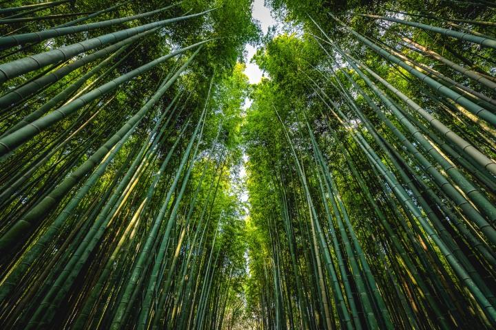 AGP, AGP Favorite, Alex G Perez, Arashiyama Bamboo Forest, Asia, Japan, Kameyama Park, Kyoto, Landscape Photography, Spring, Travel, www.AGPfoto.com
