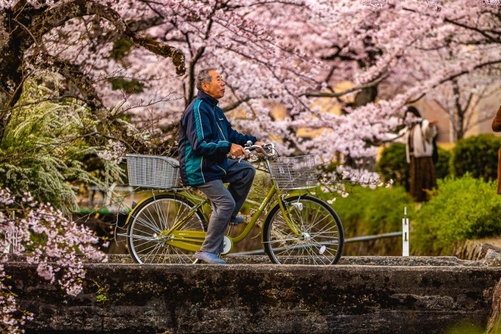 AGP, AGP Favorite, Alex G Perez, Asia, Cherry Blossoms, Japan, Kyoto, Philosopher's Path, Sakura, Spring, Travel, www.AGPfoto.com
