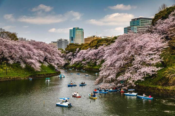 AGP, AGP Favorite, Alex G Perez, Asia, Cherry Blossoms, Chidorigafuchi Green Way, Chidorigafuchi Park, Japan, Landscape Photography, Row Boat, Sakura, Spring, Tokyo, Travel, www.AGPfoto.com