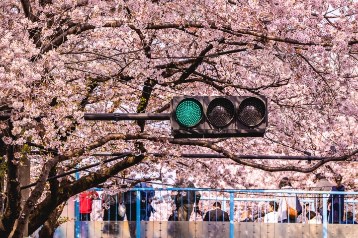 AGP, AGP Favorite, Alex G Perez, Asia, Cherry Blossoms, Japan, Sakura, Spring, Tokyo, Travel, www.AGPfoto.com