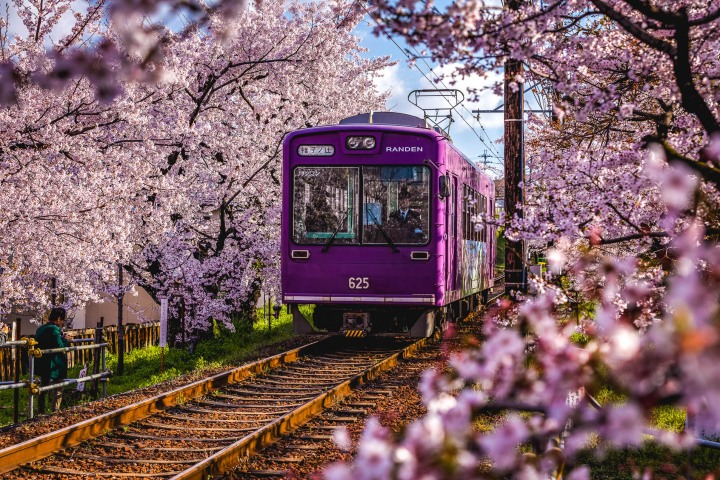 AGP, AGP Favorite, Alex G Perez, Asia, Cherry Blossoms, Japan, Kyoto, Sakura, Spring, Train, Travel, www.AGPfoto.com