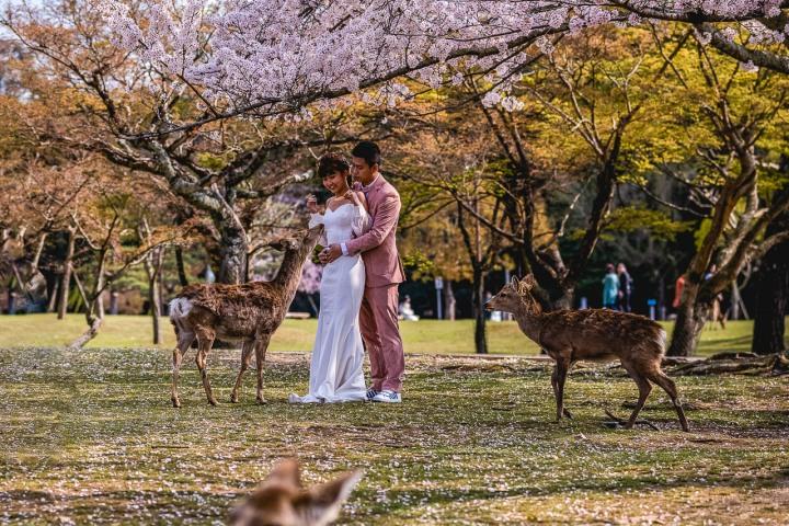 AGP, AGP Favorite, Alex G Perez, Asia, Cherry Blossoms, Deer, Engagement, Japan, Nara, Nara Park, Sakura, Spring, Travel, www.AGPfoto.com