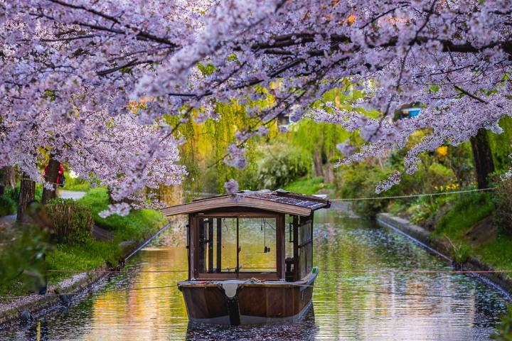 AGP, AGP Favorite, Alex G Perez, Asia, Cherry Blossoms, Japan, Kyoto, Reflections, Sakura, Spring, Travel, Wasen, www.AGPfoto.com