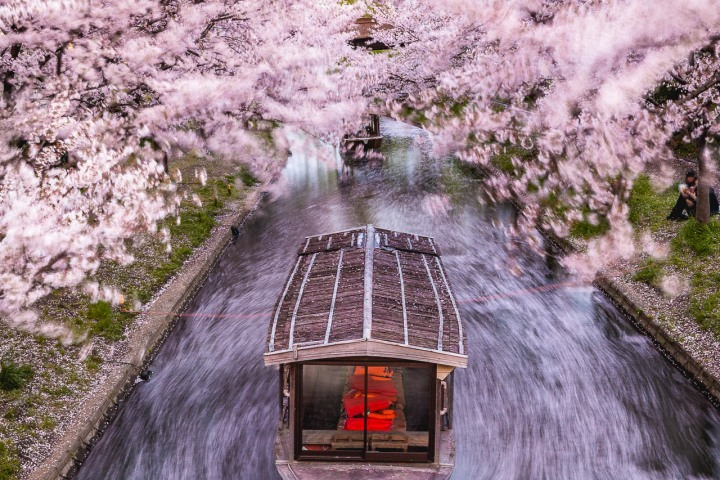 AGP, AGP Favorite, Alex G Perez, Asia, Cherry Blossoms, Japan, Kyoto, Long Exposure, Sakura, Spring, Travel, Wasen, www.AGPfoto.com
