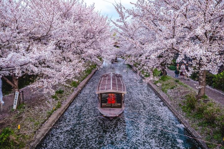AGP, AGP Favorite, Alex G Perez, Asia, Cherry Blossoms, Japan, Kyoto, Sakura, Spring, Travel, Wasen, www.AGPfoto.com
