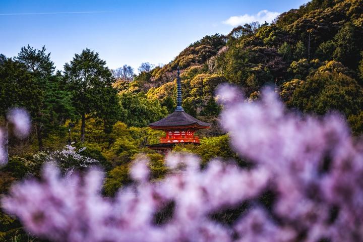 AGP, AGP Favorite, Alex G Perez, Asia, Cherry Blossoms, Japan, Kiyomizu-dera, Kyoto, Landscape Photography, Pagoda, Sakura, Spring, Travel, www.AGPfoto.com