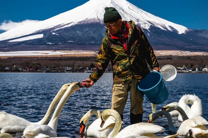 AGP, AGP Favorite, Alex G Perez, Asia, Fujinomiya, Japan, Lake Yamanak, Mount Fuji, Mt Fuji, Swan, Travel, www.AGPfoto.com